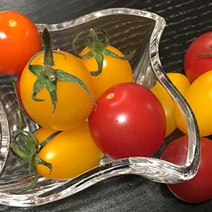 自家栽培の新鮮トマト/ありがとうございました!